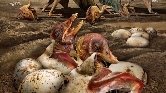 Descubiertos cientos de huevos fosilizados de pterosaurio en un yacimiento de China
