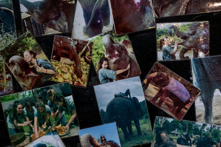 Fotos de turistas con elefantes antes de la pandemia