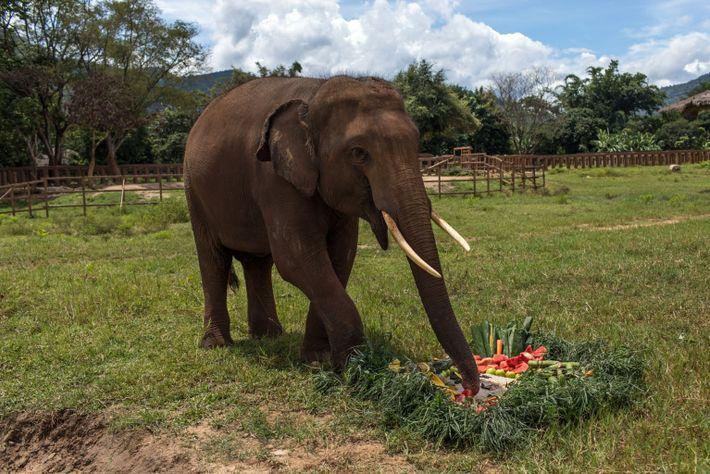 Gluay Hom disfruta de una tarta de frutas de cumpleaños
