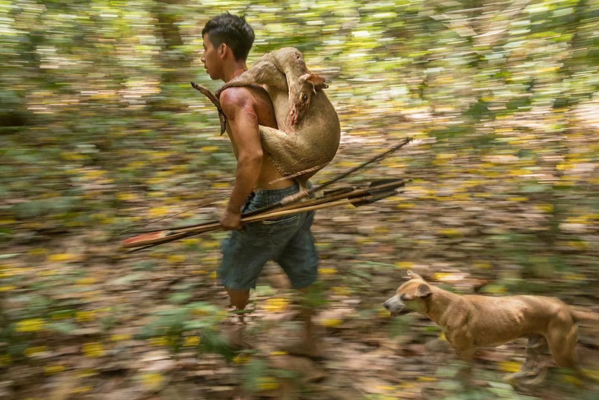 Un cazador awá vuelve a casa