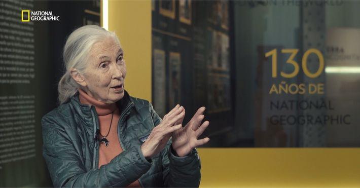 Entrevistamos a Jane Goodall a su paso por Madrid