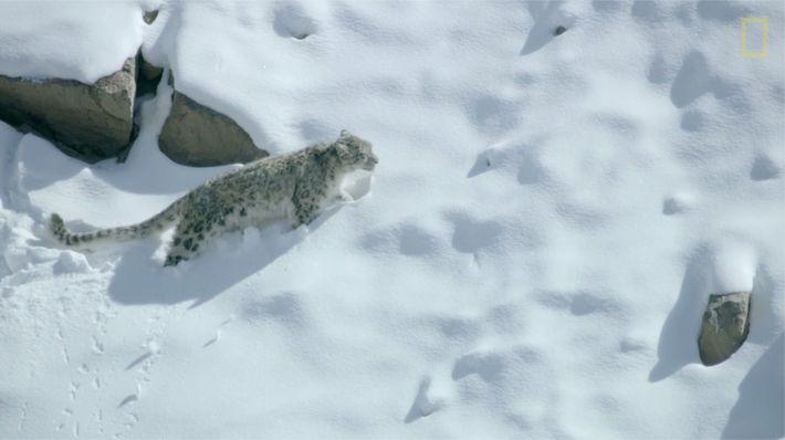 Planeta Hostil - El leopardo de las nieves