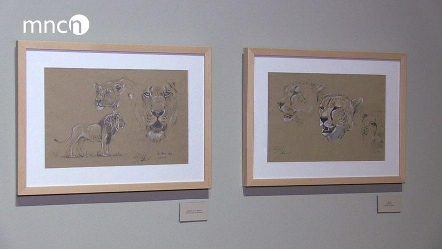 """Exposición """"Dibujando entre leones"""""""
