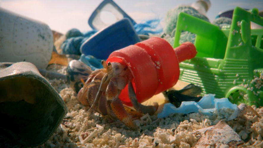 Las casas de plástico de los cangrejos ermitaños caribeños