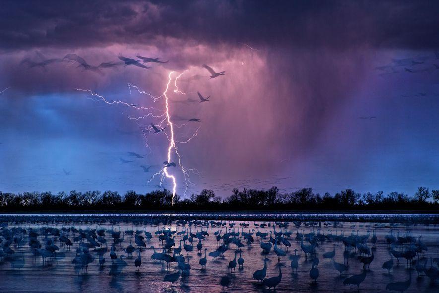 La silueta de las aves de la pradera se recorta en un cielo tormentoso sobre el …