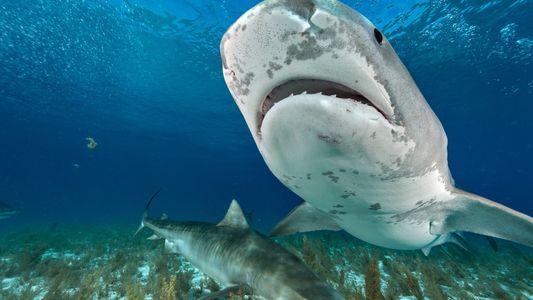 Una turista fallece víctima del inusual ataque de un tiburón en Costa Rica
