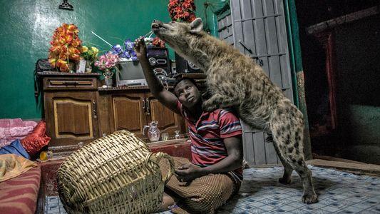 Conoce a Abbas Yusuf, el hombre que convive con las hienas
