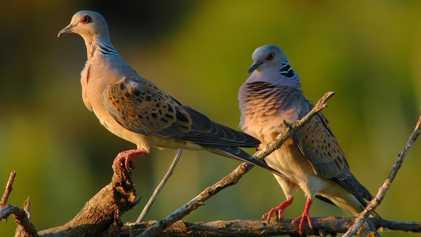 Solo un 17% de las especies en peligro de extinción están protegidas por la Unión Europea ...