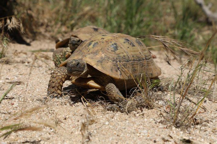 Tráfico Tortugas Mallorca 01