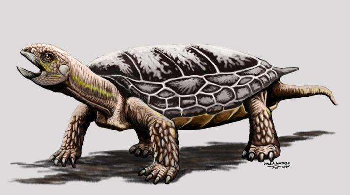 Tortuga Waluchelys Cavitesta