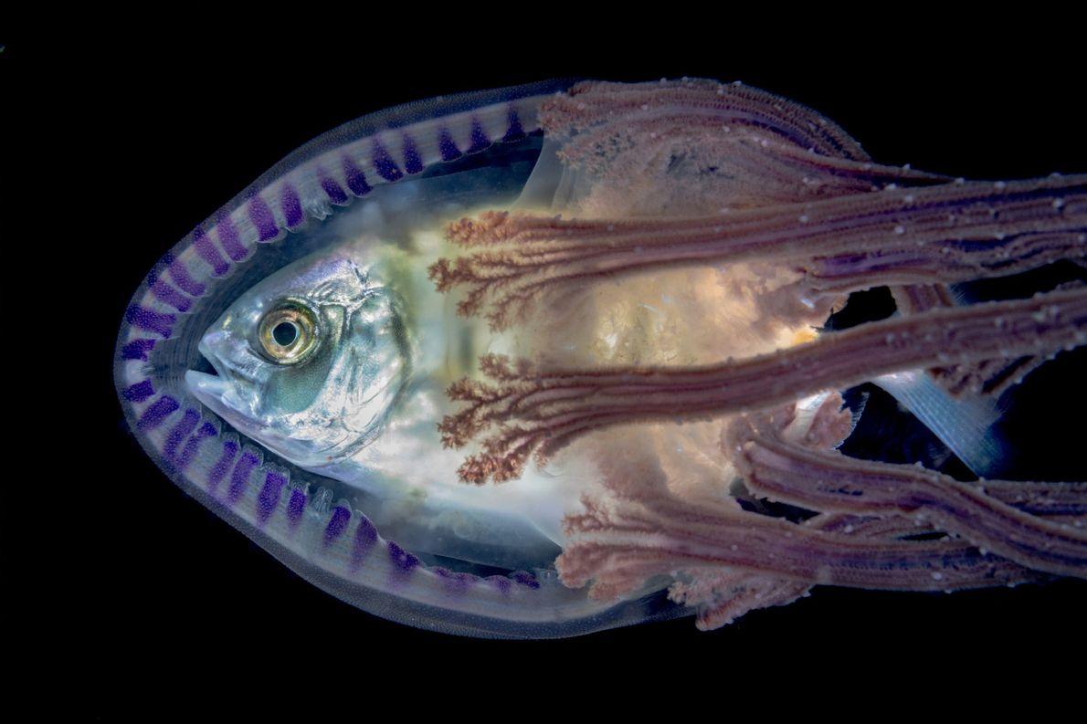Pez y medusa
