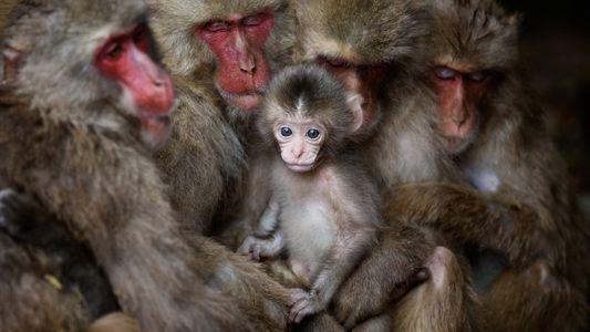 Nuestras fotos de animales favoritas del concurso de Fotografía de Viajes