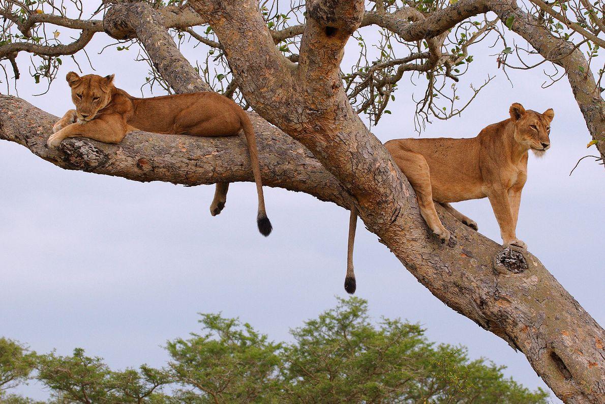 Parque Nacional de la Reina Isabel, Uganda