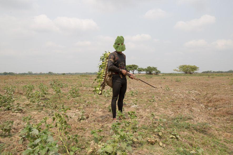 Los cazadores del noroeste de Colombia usan máscaras hechas de hojas anchas y sólidas como camuflaje ...