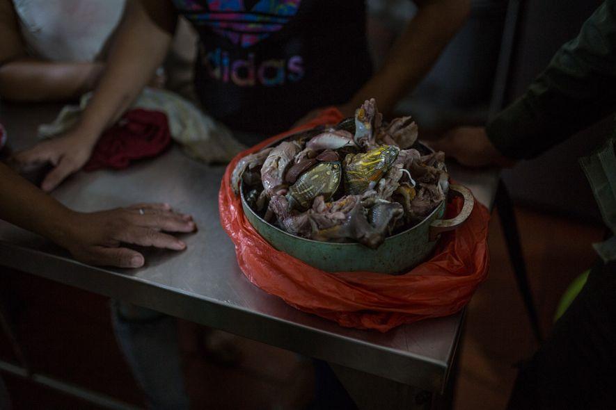 Tras confiscar una olla de carne de tortugas hicoteas en la parte trasera de un puesto ...