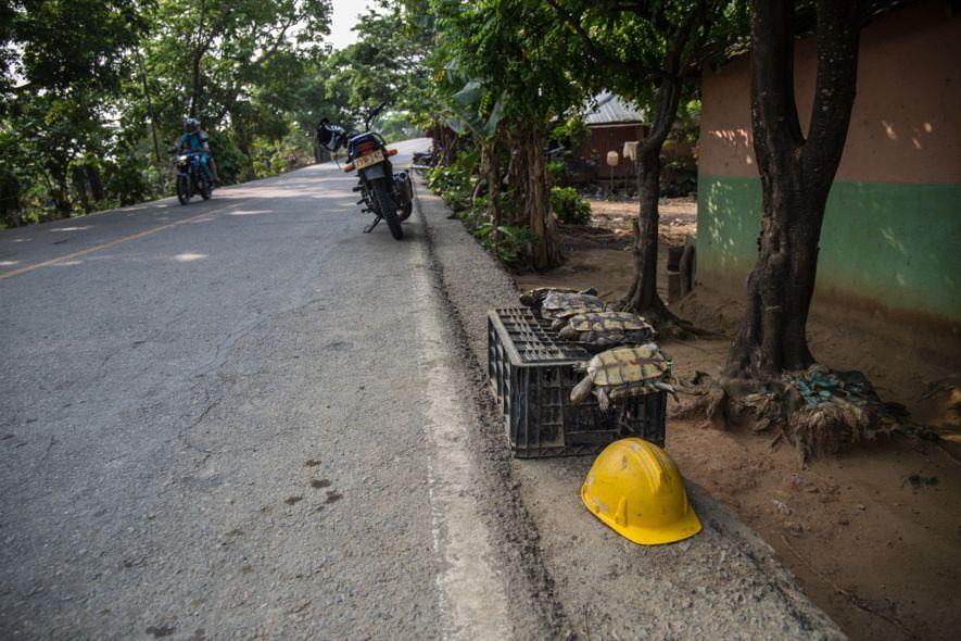 Comprar, vender y traficar con tortugas es ilegal, pero aún es una práctica habitual. La aplicación ...