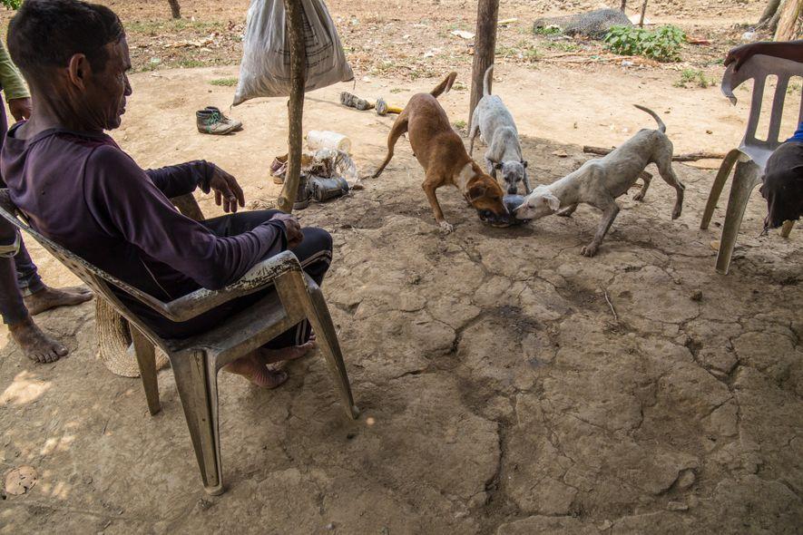 Los cazadores suelen utilizar perros adiestrados para olfatear y alertar a sus dueños de la presencia ...