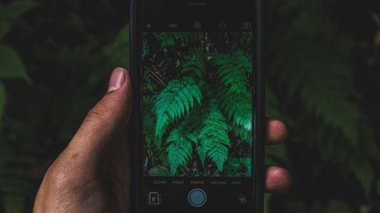 Diez apps que compensan tu huella en el planeta