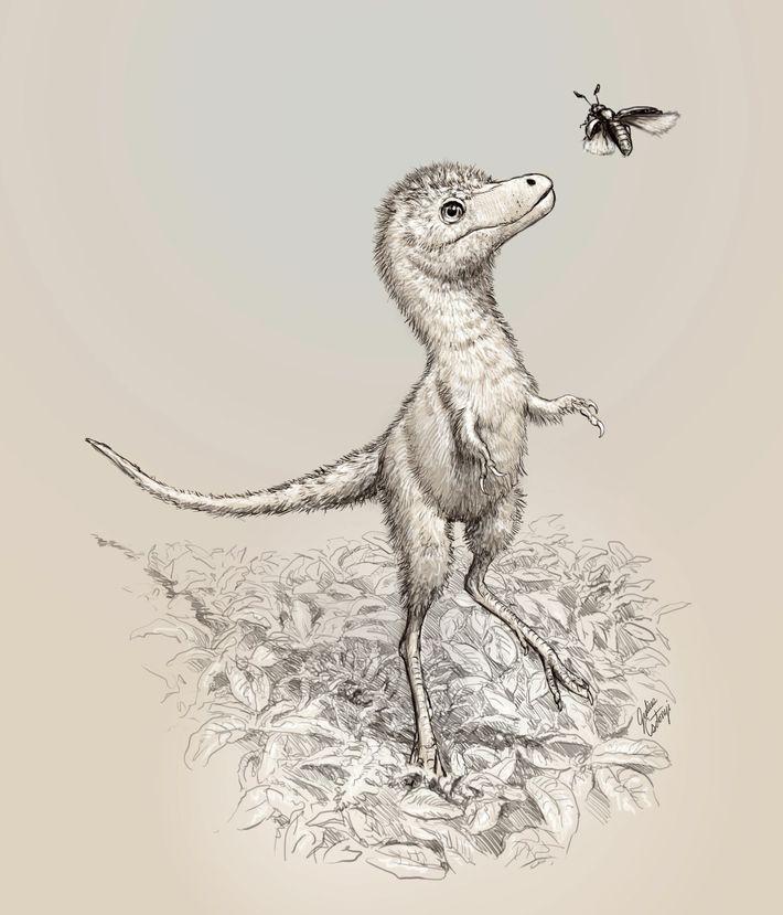 Ilustración de una cría de Tyrannosaurus rex