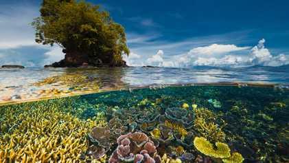 Un informe de la ONU revela que se no se han cumplido los objetivos de biodiversidad ...