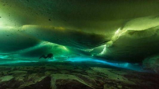 Imágenes: la vida que se esconde bajo la Antártida