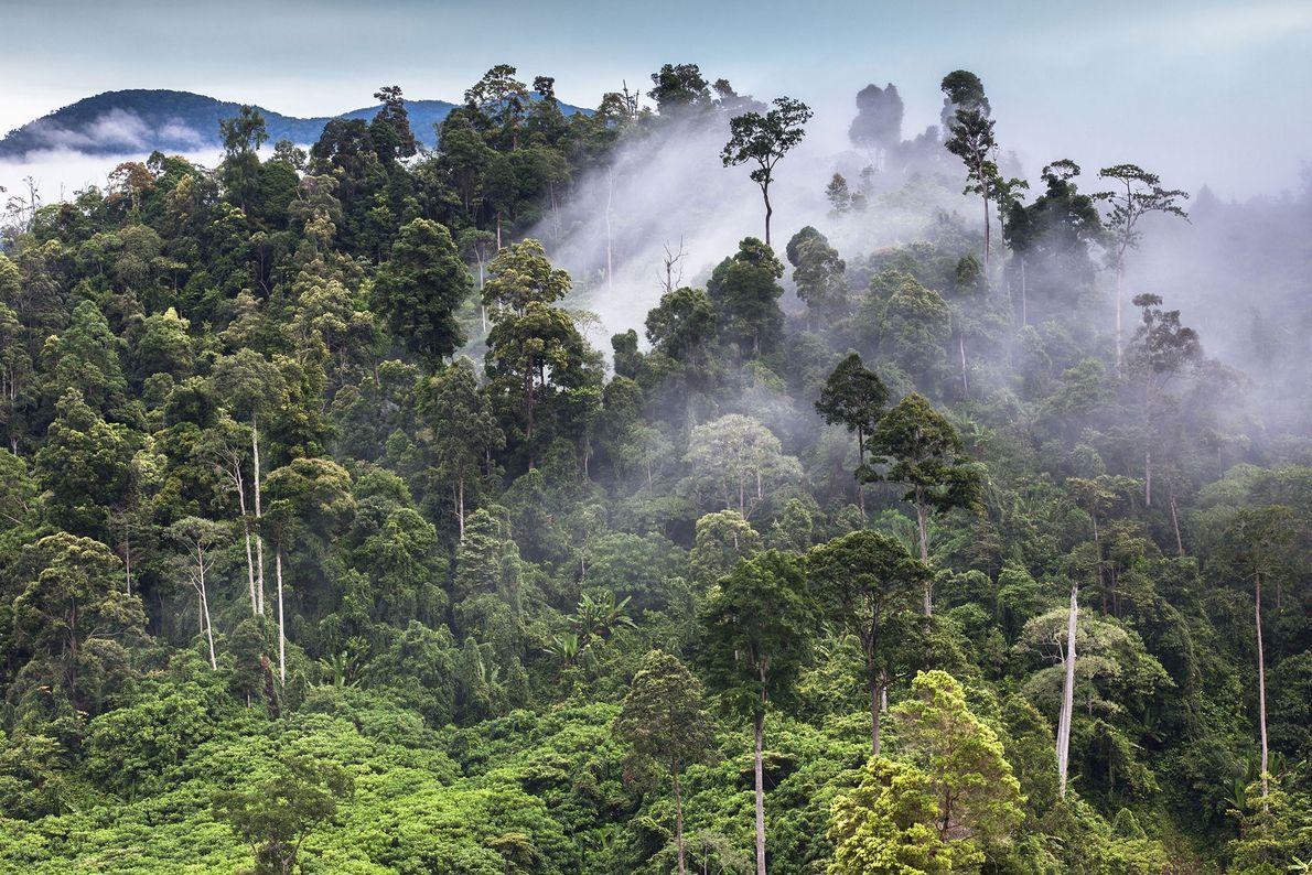 Selva tropical de Sumatra, Indonesia