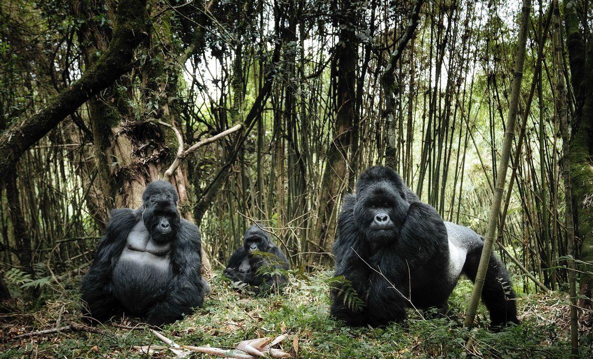 Parque nacional de Virunga, República Democrática del Congo