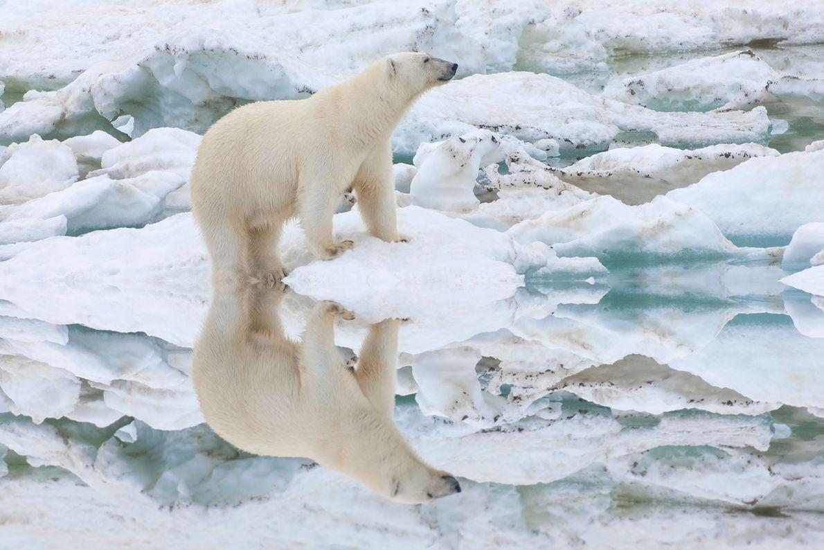 Reserva de la isla de Wrangel