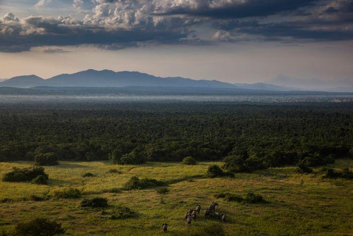 Elefantes en Virunga