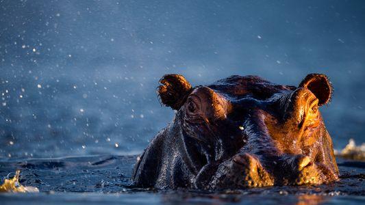 Las dificultades del apareamiento animal bajo el agua
