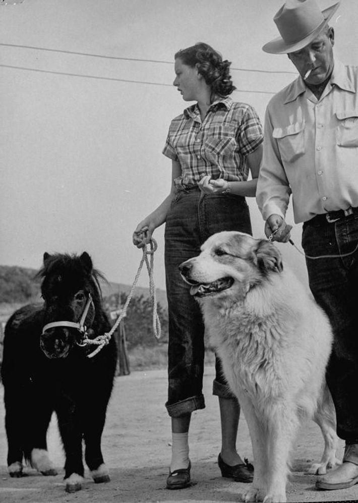 Un caballo miniatura junto a un perro