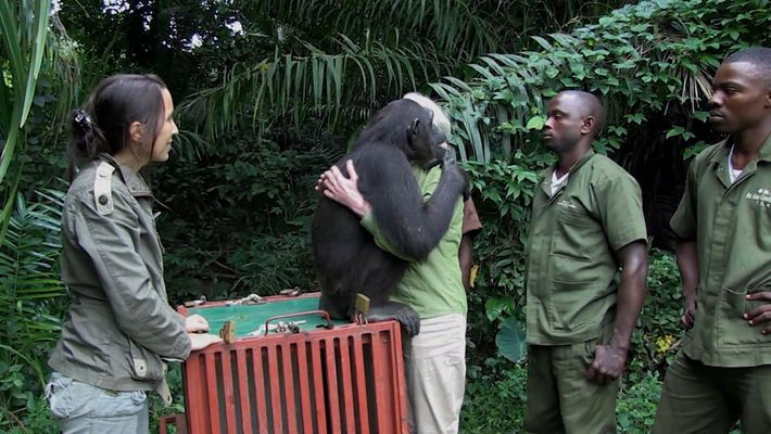 20th Century FOX se asocia con el Jane Goodall Institute para la rehabilitación de chimpancés en ...