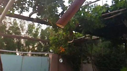 El hipnótico vídeo de una avispa bebiendo a cámara lenta