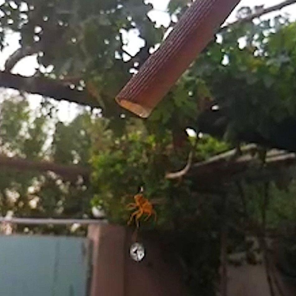 VÍDEO: Esta avispa bebe a cámara lenta y las imágenes son hipnóticas