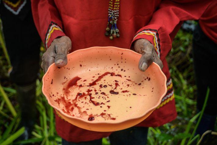 Fotografía de la sangre de un pollo muerto