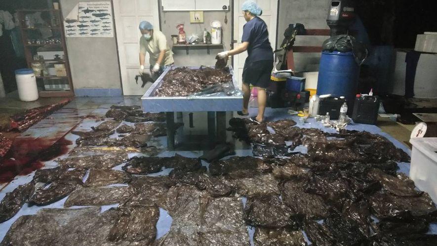 80 bolsas de plástico: las responsables de la muerte de una ballena