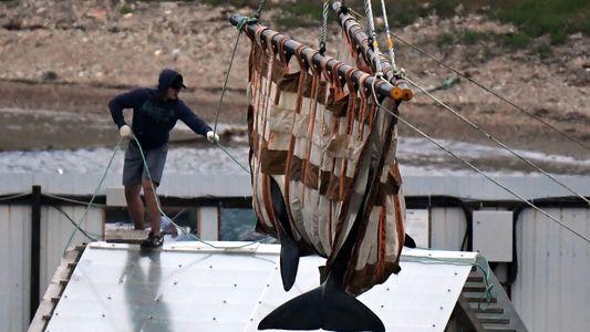 Termina la liberación de los cetáceos de la «cárcel de ballenas» de Rusia