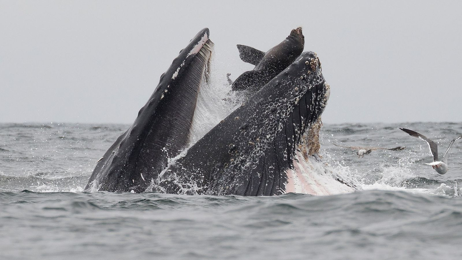 Ballena y lobo marino