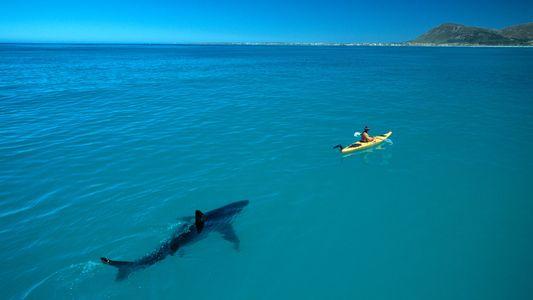 Cómo se hizo viral esta fotografía de un tiburón blanco