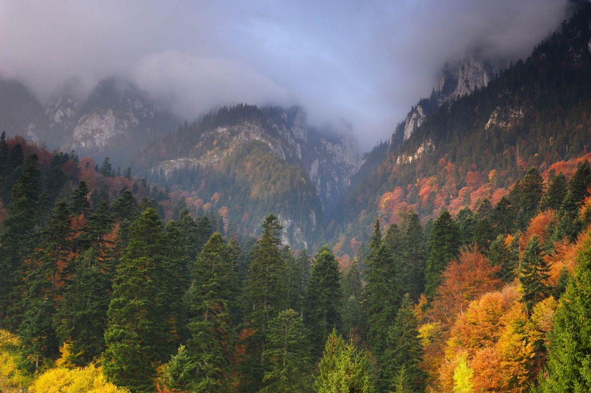 Parque nacional de Piatra Craiului, Rumanía