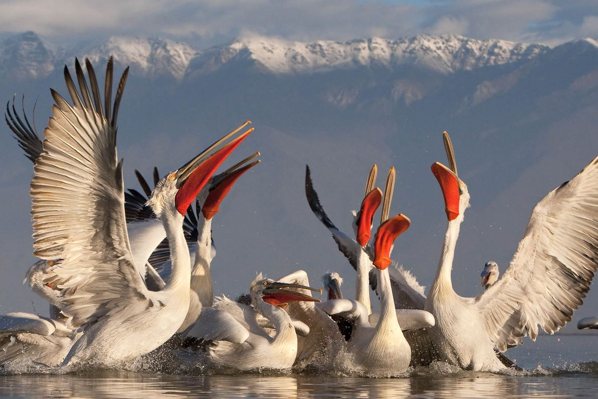 Lago Kerkíni, Grecia