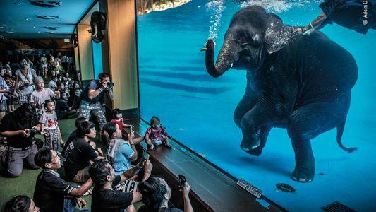 Las 19 mejores imágenes galardonadas del premio Wildlife Photographer 2021