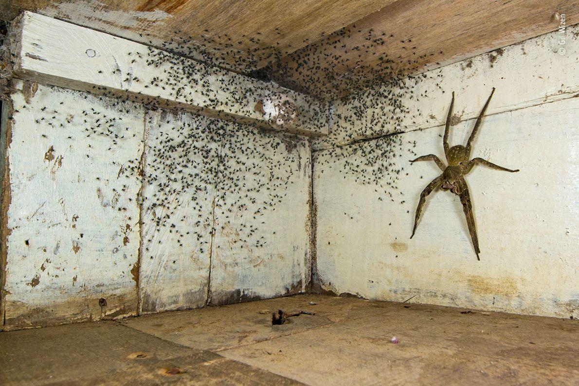 Tras notar que había pequeñas arañas por toda su habitación en Brasil, el fotógrafo canadiense-israelí Gil ...