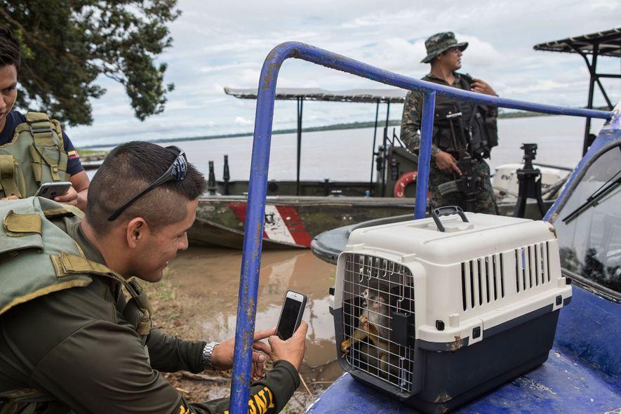 Un soldado de la fuerza aérea saca una foto a un mono ardilla rescatado. Los residentes de Puerto Alegría obtienen propinas de las visitas turísticas, mientras que los turoperadores que organizan las visitas obtienen un beneficio mucho más grande.