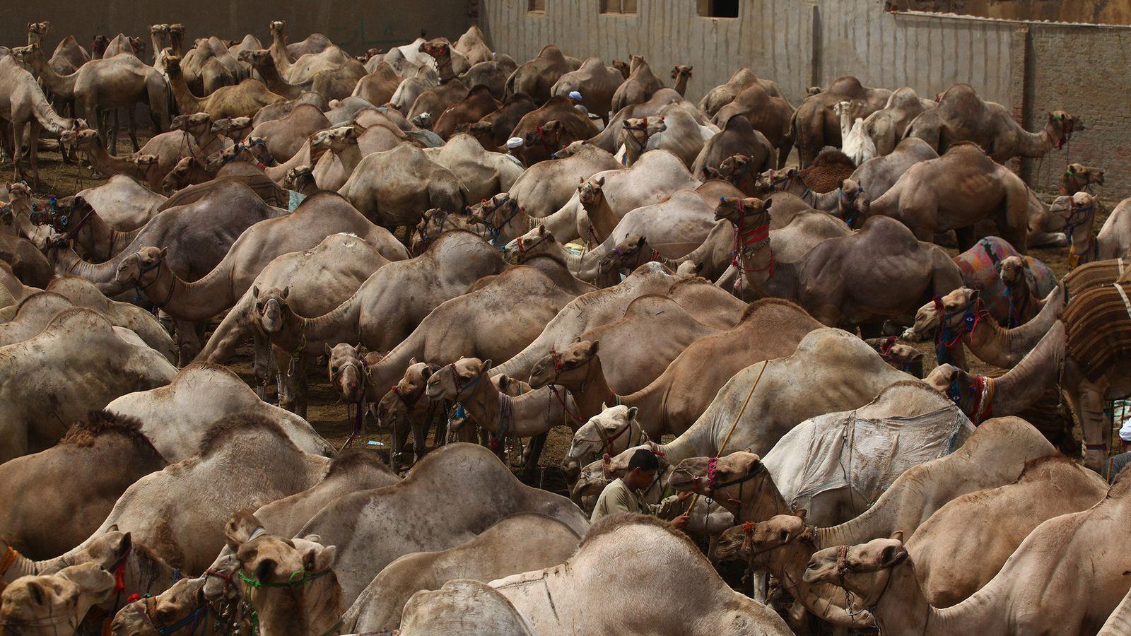 El comercio legal de vida silvestre es lo que debería preocuparnos para evitar la próxima pandemia