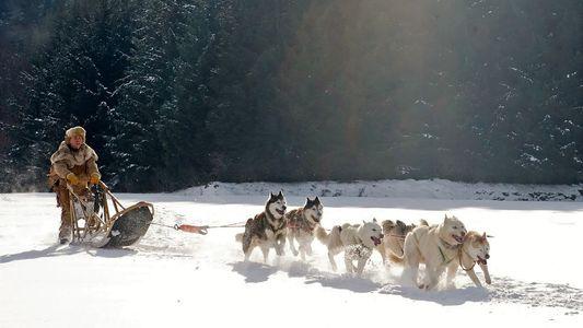 Descubren que los perros de trineo aparecieron hace 9500 años en Siberia