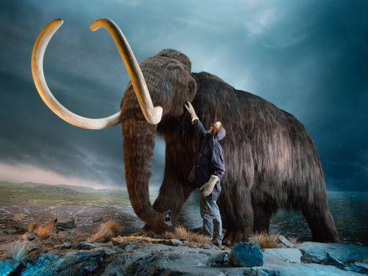 El mamut está extinto. ¿Por qué quieren considerarlo especie «en peligro de extinción»?