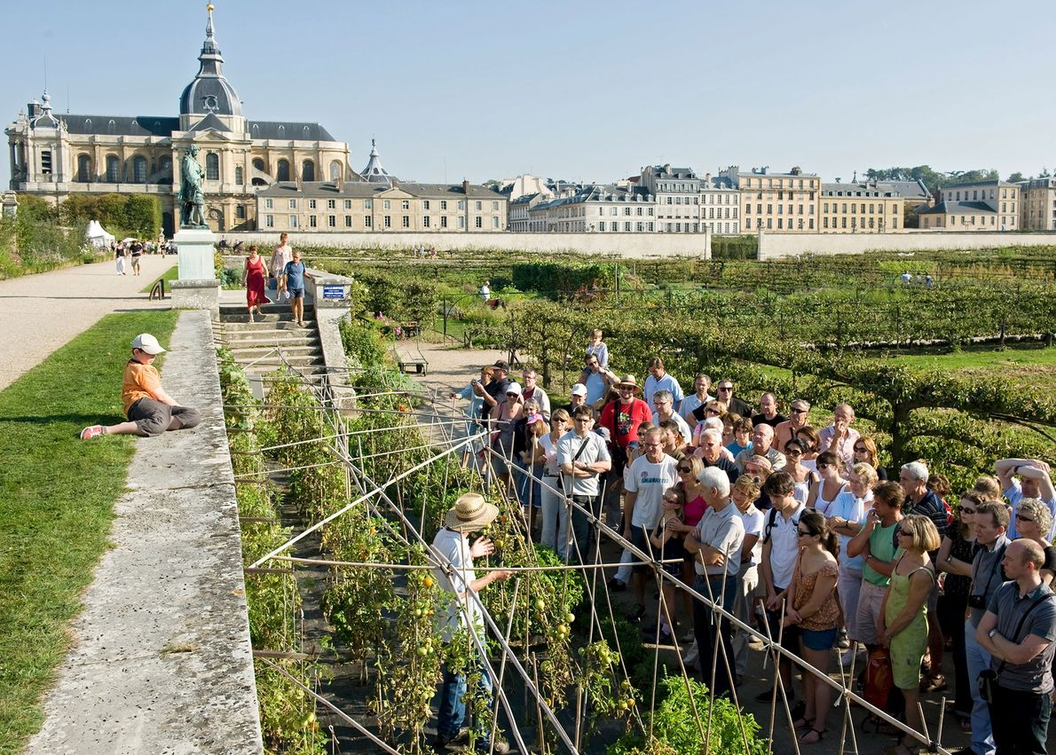 Huerto del rey, Versalles