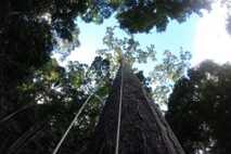 Borneo, Malasia