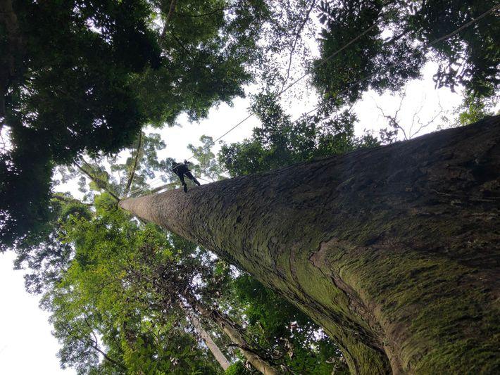 Árbol más alto